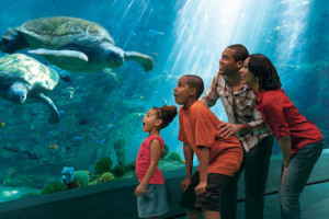 Explore the Ocean's Wonders - SeaWorld San Diego Vacation package information