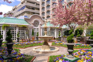 The Fairmont Washington, DC Georgetown - Pip Pip Cherry-io! Cherry Blossom Festival Package package information