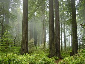Wine Country & Redwoods Sightseeing Tour Package package information