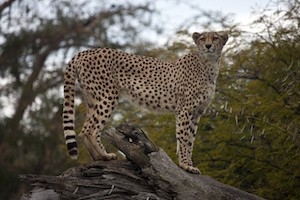 San Diego Zoo or Safari Park Tickets and a stay at the Lodge at Torrey Pines package information