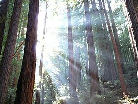 Muir Woods & Wine Country Sightseeing Tour Package package information