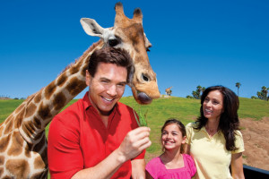 An Adventurer's Paradise at the San Diego Zoo Safari Park package information