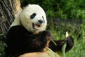 Zoo Panda Package - package information