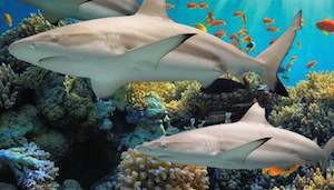 Baltimore Aquarium Ultimate VIP Package-Pier 5 Hotel package information