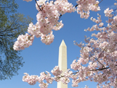 Willard InterContinental Washington DC - Cherry Blossom Festival Package package information