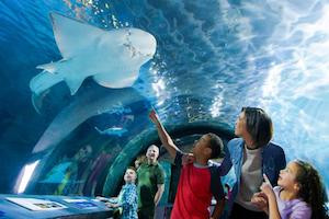 Newport Aquarium Package package information